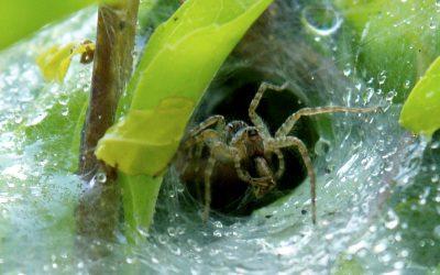 The Spider and Hurricane Matthew